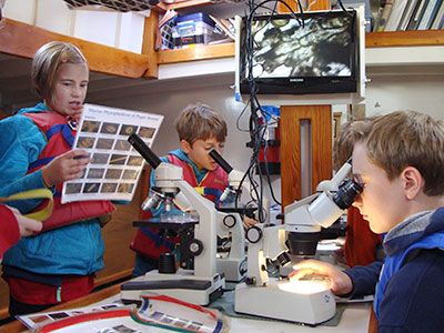 Looking at plankton under the microscope
